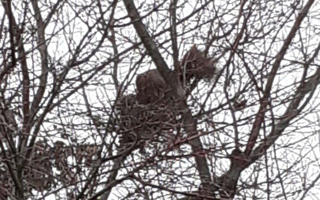 Leeres Nest