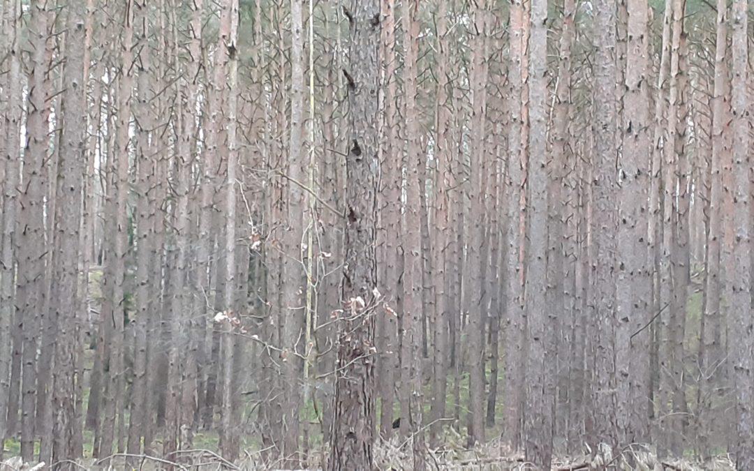 Wald?