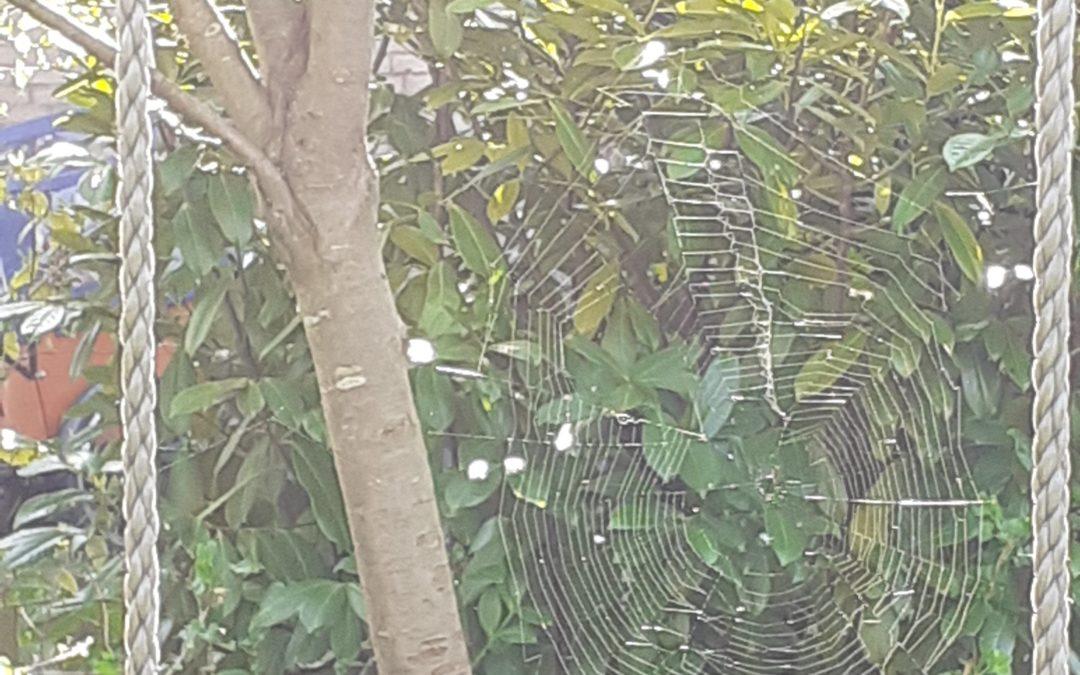 Spinngewebe