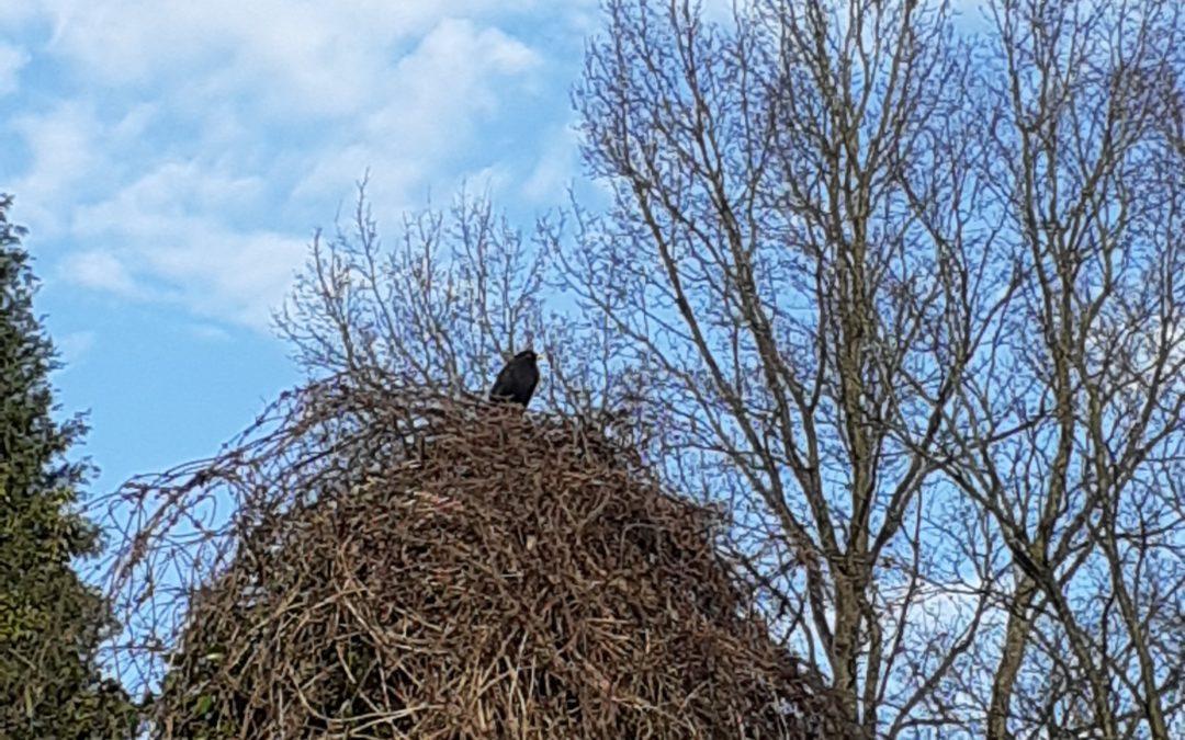 Das große Nest